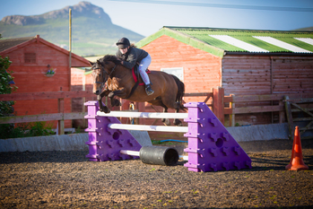 138cm all rounder mare