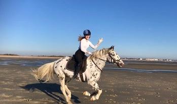 Appaloosa x  project horse