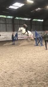 14.1  Connemara perfect second pony