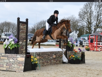 Fabulous and Beautiful Second Pony