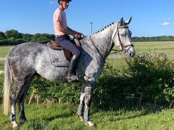 Stunning dapple grey gelding