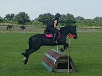 All Rounder / Pony Club Pony