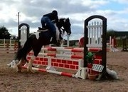 eventing/ showjumping/ pony club 14hh pony