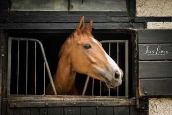All Rounders Dream Horse