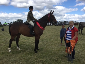 Perfect all rounder sport-horse