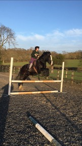2 horses for loan for me and my friends