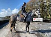 17hh 1.20m 7 year old. ISH. Easy ride.