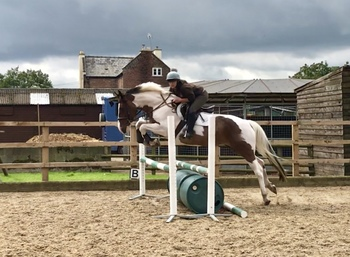PROVEN HUNTER /XC MACHINE / ALL-ROUND FUN HORSE