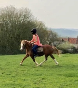 Exceptionally Well Bred Lead Rein/Show Pony
