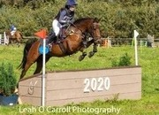 5yr Old 14.1hh superb competition pony