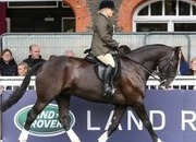 Bombproof Super Cob - One in a Million
