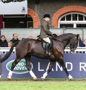 ***SOLD***Bombproof Super Cob - One in a Million
