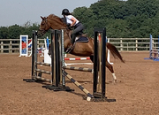 Fabulous showjumper out of Heartbraker lines