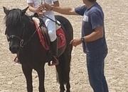 128cms/12.2hh 1m SJ pony