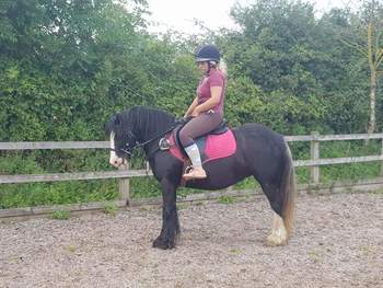 12.2 bombproof mare