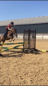 Gorgeous 12.2hh pony for sale