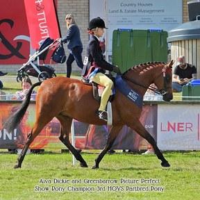 Top class show pony / partbred Arab/partbred Welsh