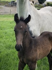 smart Urkel foal
