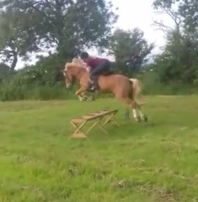 FAB PONY FOR SALE!!