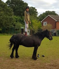 Fabulous Registered Fell Pony