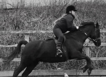 Fabulous second pony – for sale or possible loan
