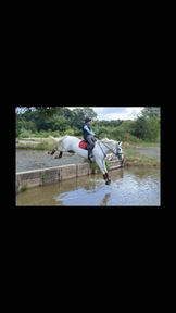 Stunning ISH all rounder mare