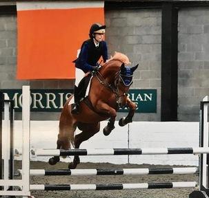 148cm Irish Sports Horse