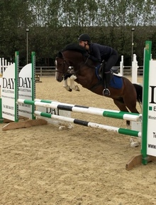 Stunning 13hh 4 year old for sale