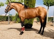 P.R.E. 5 year old €25,000