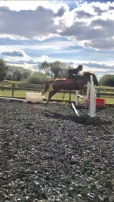 Wizzy jumping pony