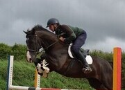 7yr Old showjumping pony/Eventer