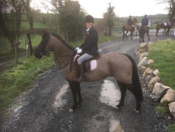 Ladies hunter / jumper / family horse
