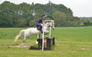 New Forest Pony - Grey - Mare - 14 Hands - 13 Years old