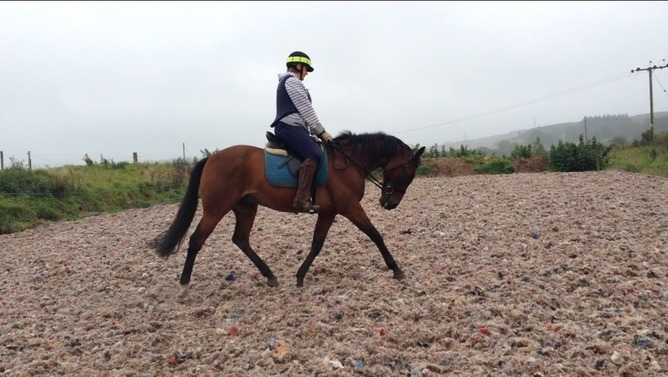 Bombproof fun horse for part-loan