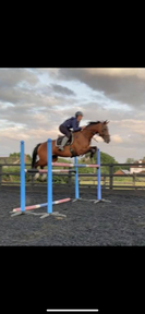 *TOP QUALITY MARE FOR SALE*