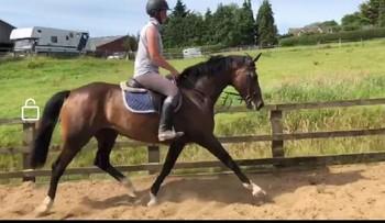 Outstanding teen fun horse