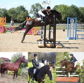 Stunning 15.1hh Welsh D Mare