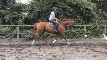 Handsome event type gelding