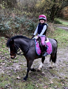 Welsh 12hh Pony