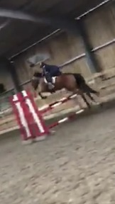 15.1hh mare registered sports horse