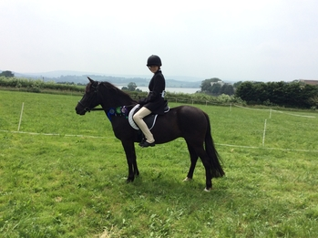 13.2hh Beautiful New Forest Mare