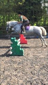 Connemara pony for loan