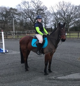 Quality 14-14.1hh bay registered Connemara gelding