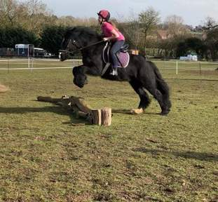 Fell X mare 14hh