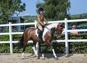 Outstanding 15hh Skewbald Mare