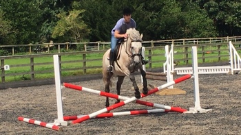 Serious Competition Prospect - FEI / WHP / Small Ladies Hunter