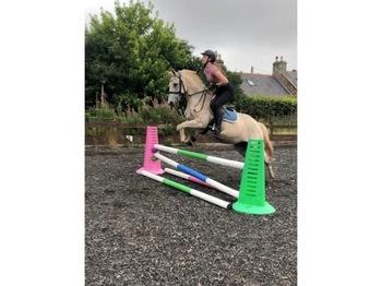 148cm pony for sale