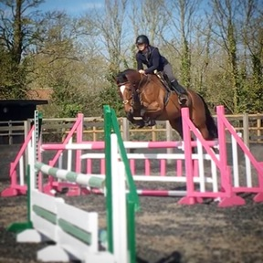 Top quality showjumping mare