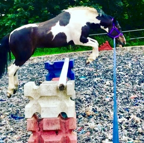 Lovely fun easy gelding