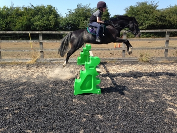 12.2 Welsh section b Project pony